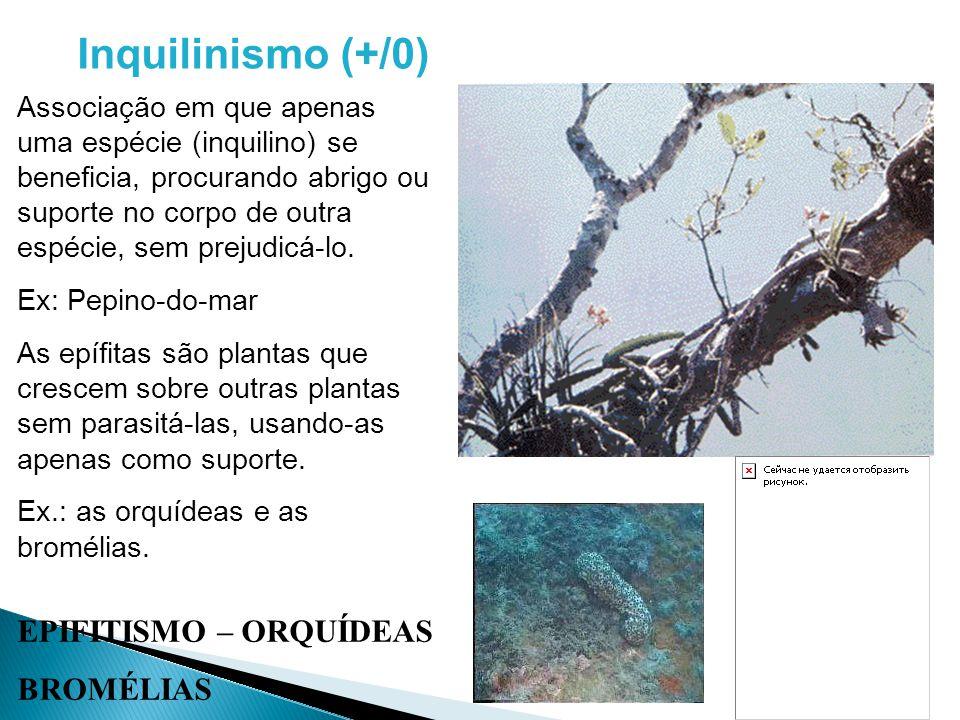 Inquilinismo (+/0) EPIFITISMO – ORQUÍDEAS BROMÉLIAS