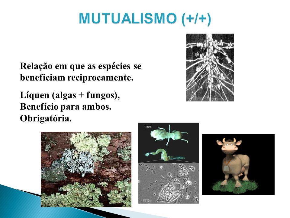 MUTUALISMO (+/+) Relação em que as espécies se beneficiam reciprocamente.