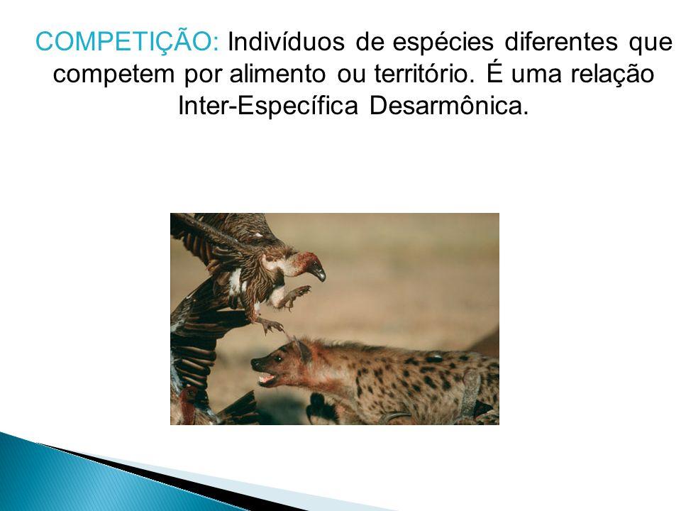 COMPETIÇÃO: Indivíduos de espécies diferentes que competem por alimento ou território.