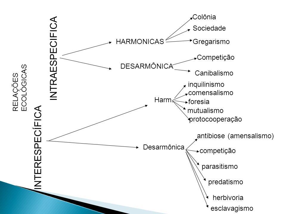 INTRAESPECIFICA INTERESPECÍFICA Colônia Sociedade HARMONICAS