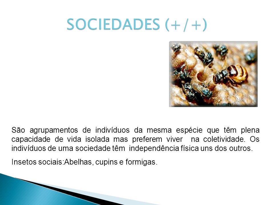 SOCIEDADES (+/+)