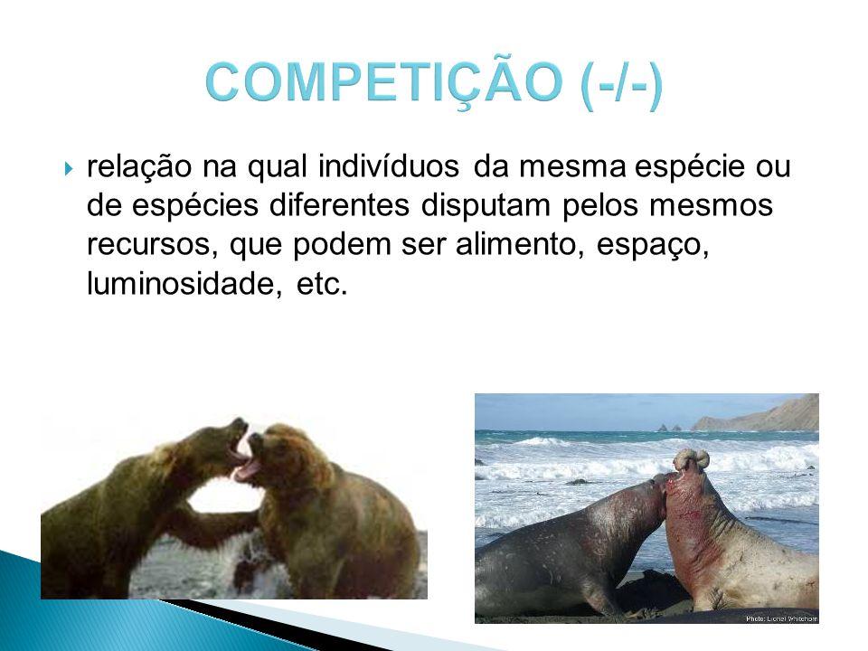 COMPETIÇÃO (-/-)