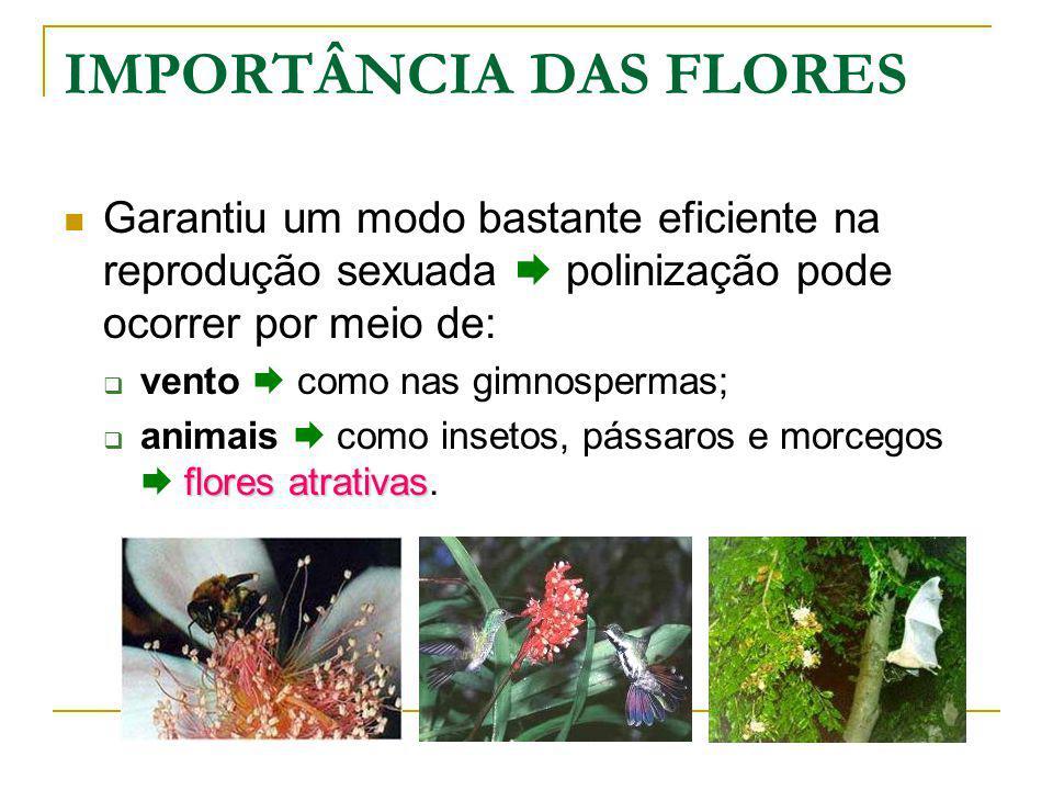 IMPORTÂNCIA DAS FLORES