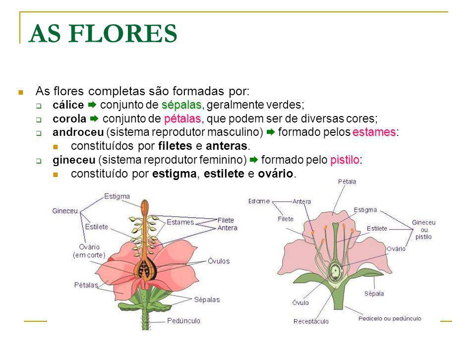 AS FLORES As flores completas são formadas por: