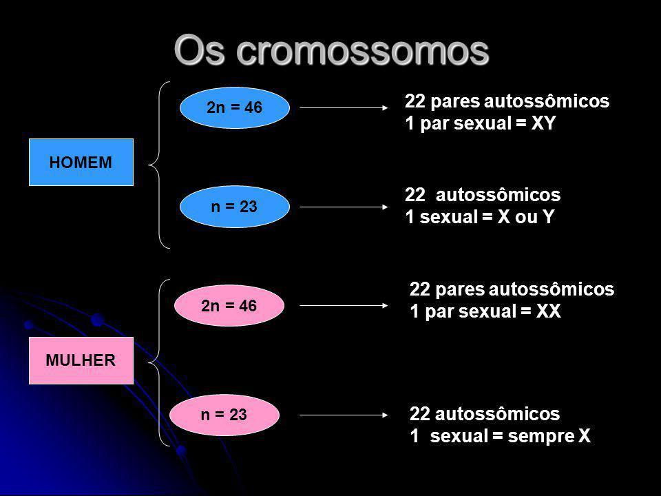 Os cromossomos 22 pares autossômicos 1 par sexual = XY 22 autossômicos