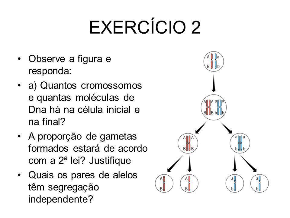 EXERCÍCIO 2 Observe a figura e responda:
