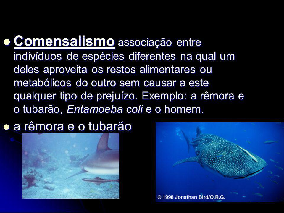 Comensalismo associação entre indivíduos de espécies diferentes na qual um deles aproveita os restos alimentares ou metabólicos do outro sem causar a este qualquer tipo de prejuízo. Exemplo: a rêmora e o tubarão, Entamoeba coli e o homem.