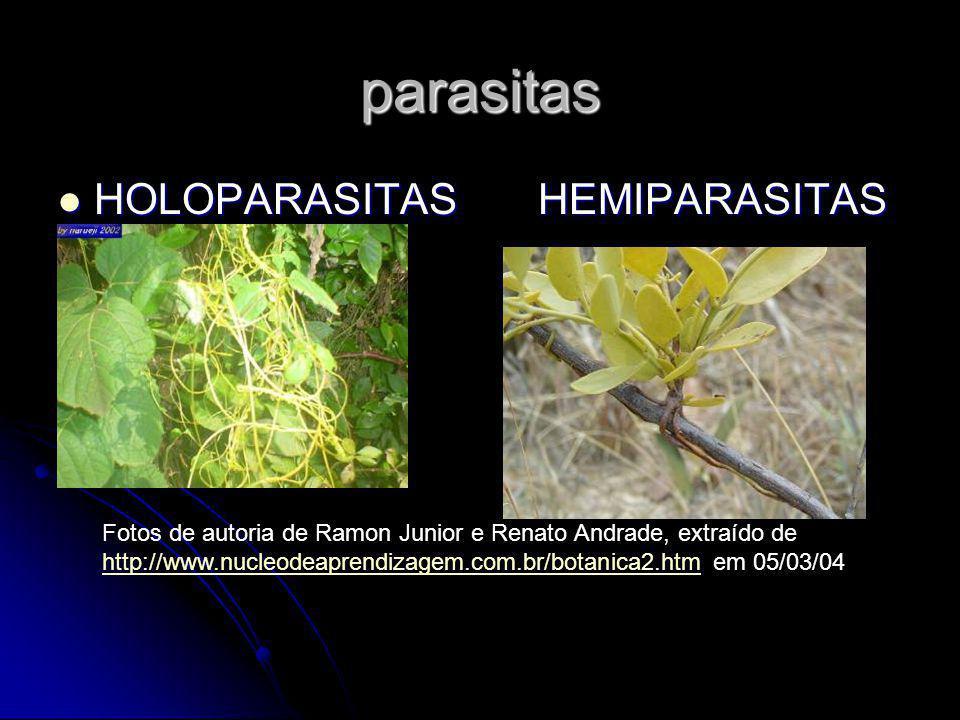 parasitas HOLOPARASITAS HEMIPARASITAS