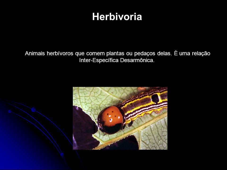 Herbivoria Animais herbívoros que comem plantas ou pedaços delas.