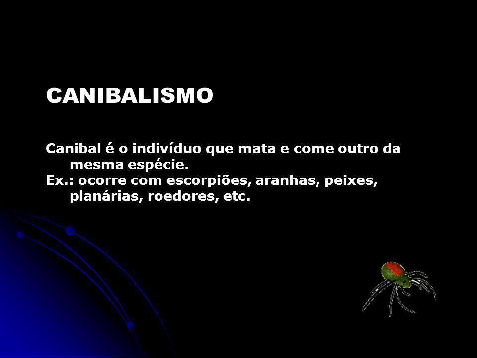 CANIBALISMO Canibal é o indivíduo que mata e come outro da mesma espécie. Ex.: ocorre com escorpiões, aranhas, peixes, planárias, roedores, etc.