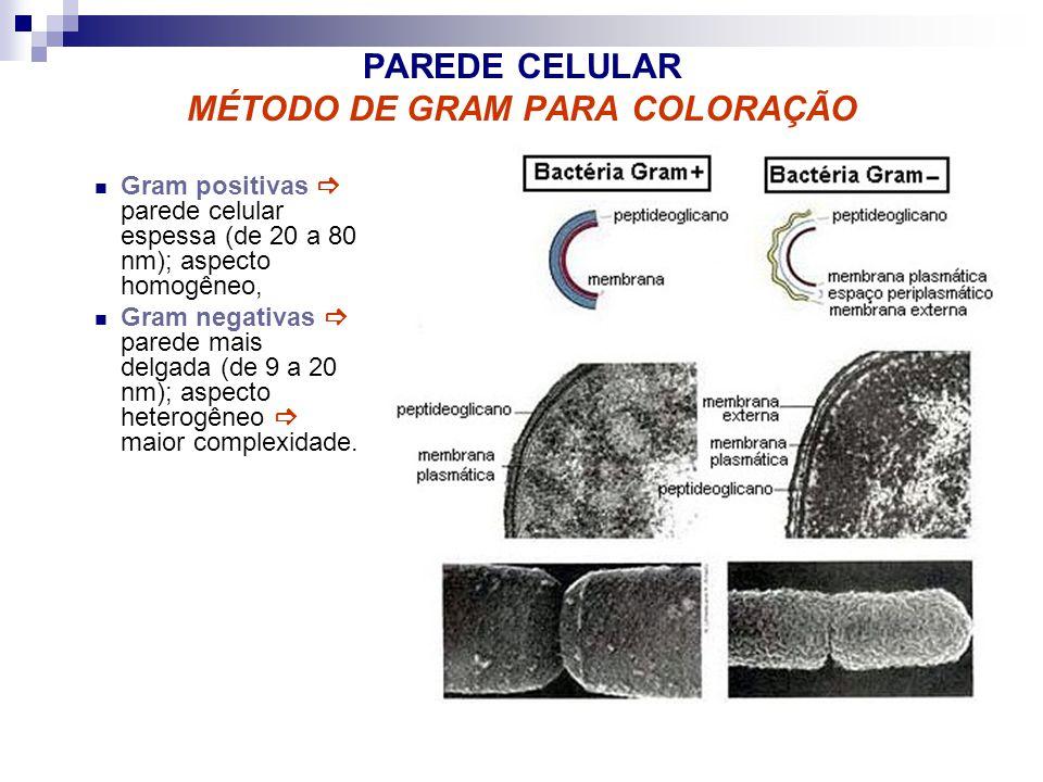 PAREDE CELULAR MÉTODO DE GRAM PARA COLORAÇÃO