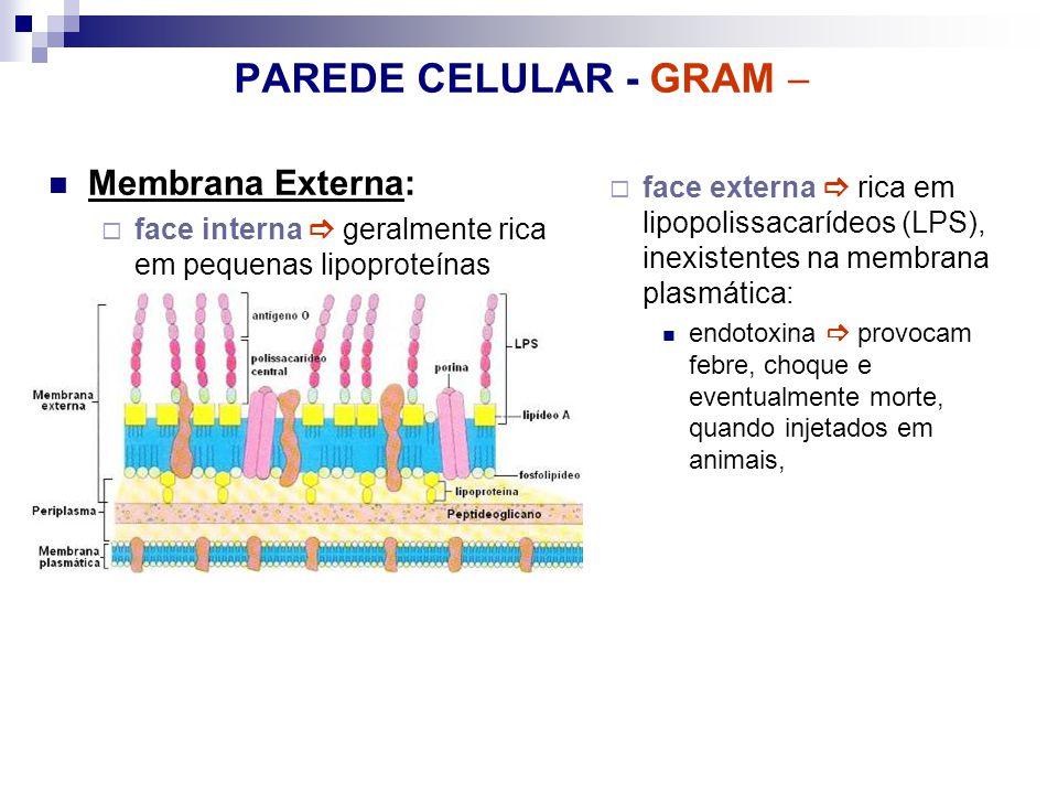 PAREDE CELULAR - GRAM  Membrana Externa: