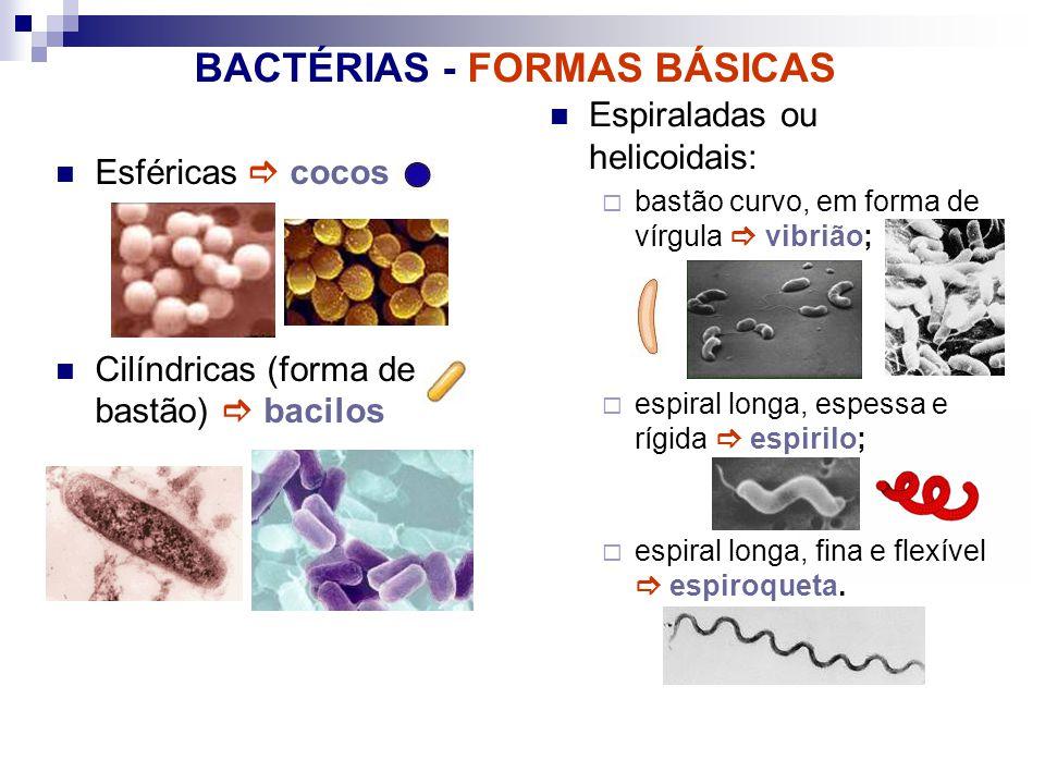 BACTÉRIAS - FORMAS BÁSICAS