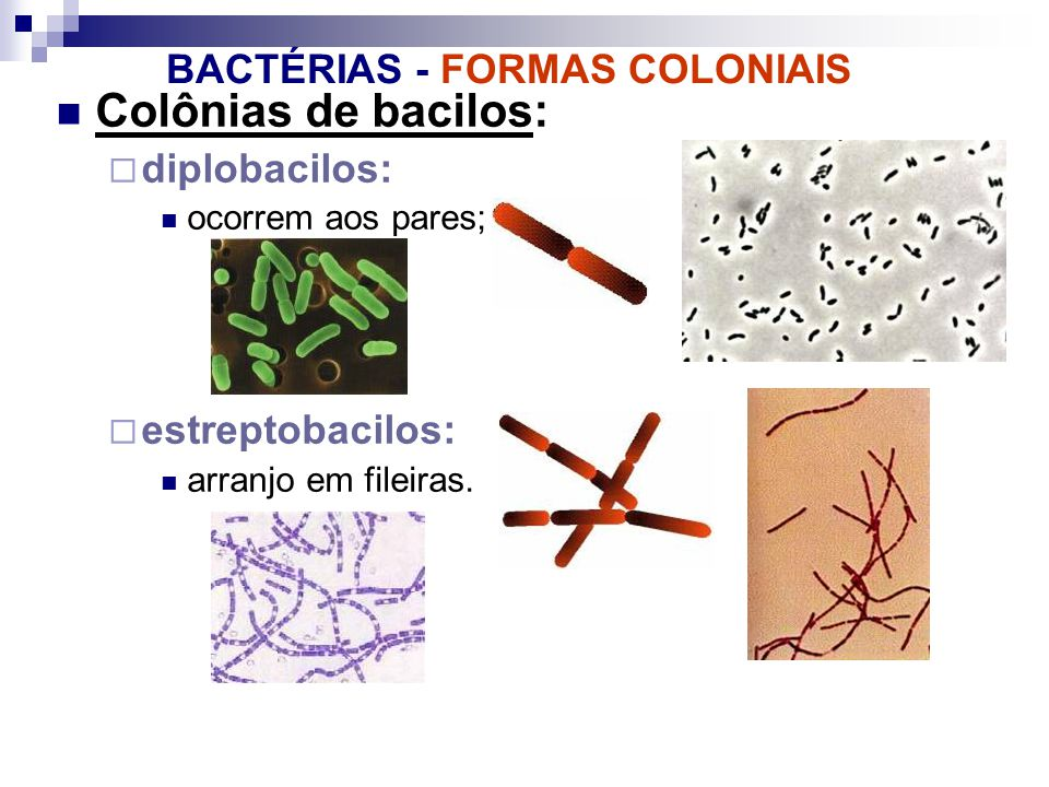 BACTÉRIAS - FORMAS COLONIAIS