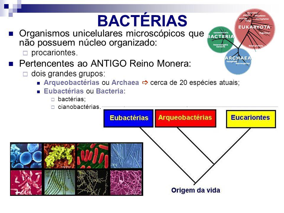 BACTÉRIAS Organismos unicelulares microscópicos que não possuem núcleo organizado:
