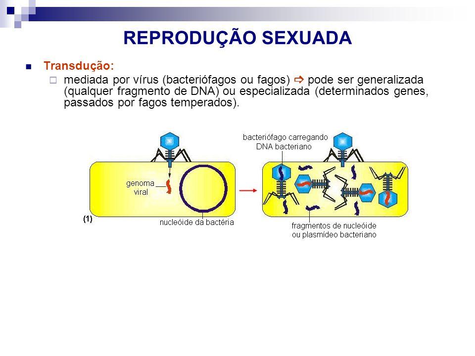 REPRODUÇÃO SEXUADA Transdução: