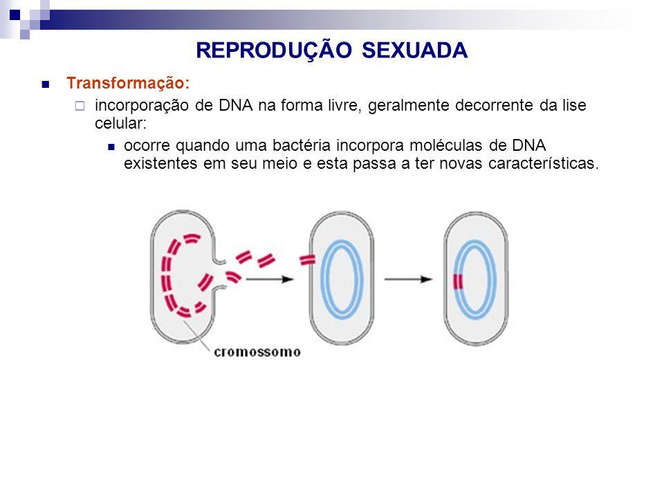 REPRODUÇÃO SEXUADA Transformação: