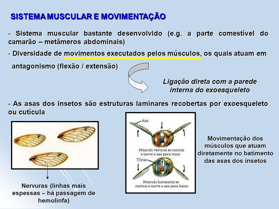 SISTEMA MUSCULAR E MOVIMENTAÇÃO