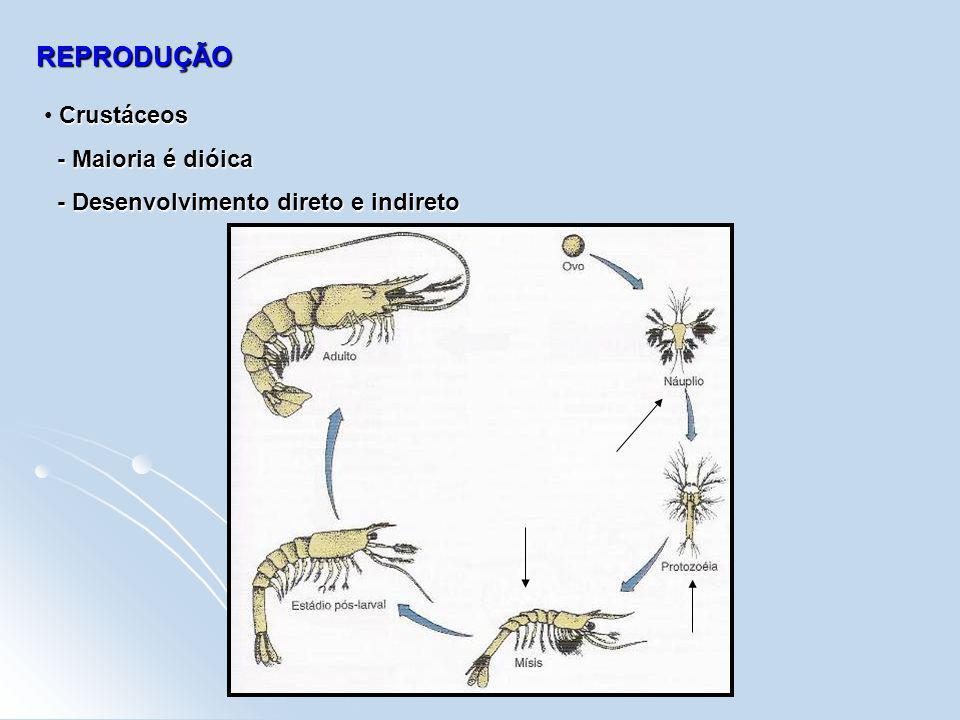 REPRODUÇÃO Crustáceos - Maioria é dióica