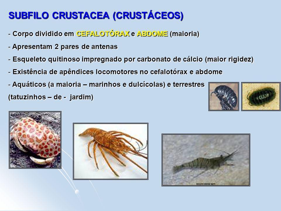 SUBFILO CRUSTACEA (CRUSTÁCEOS)