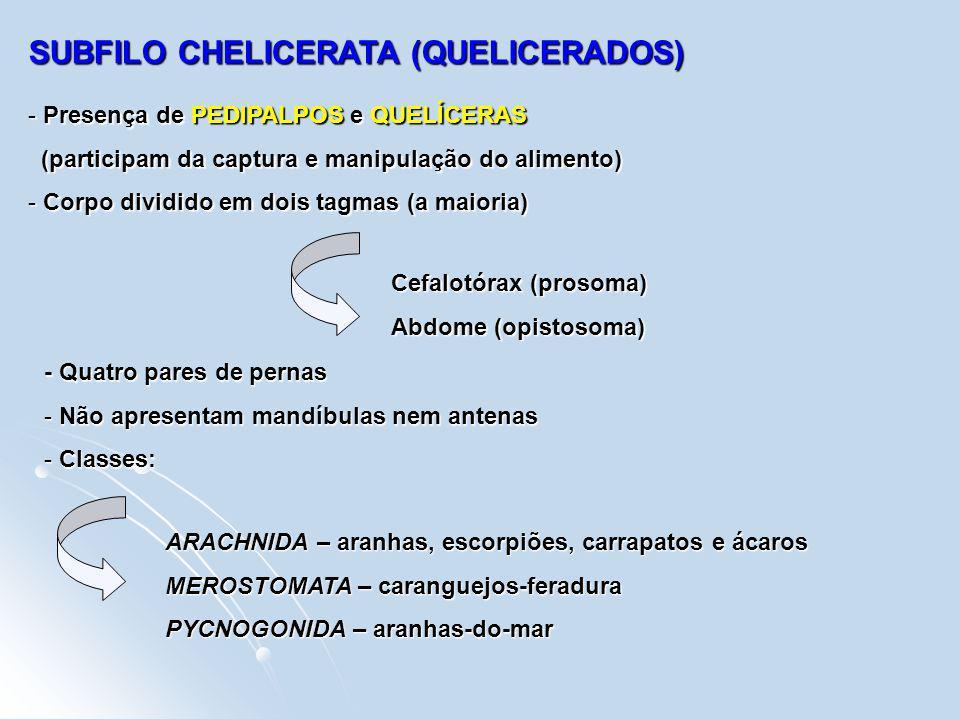 SUBFILO CHELICERATA (QUELICERADOS)
