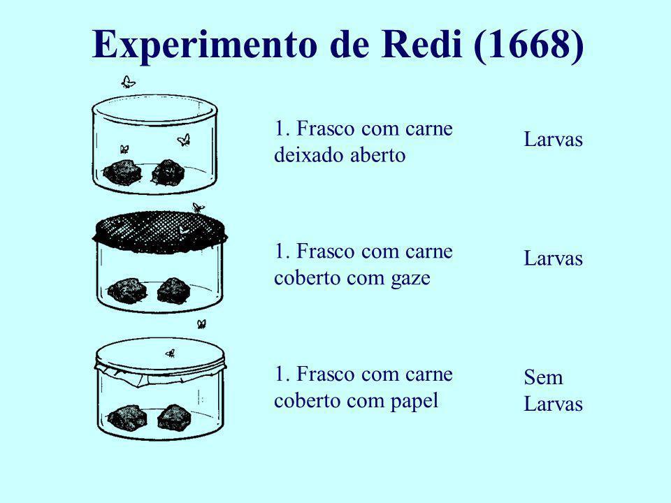 Experimento de Redi (1668) 1. Frasco com carne deixado aberto Larvas
