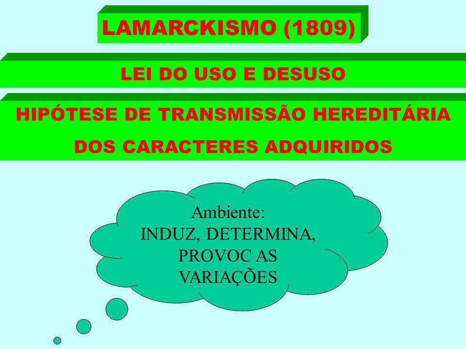 HIPÓTESE DE TRANSMISSÃO HEREDITÁRIA DOS CARACTERES ADQUIRIDOS