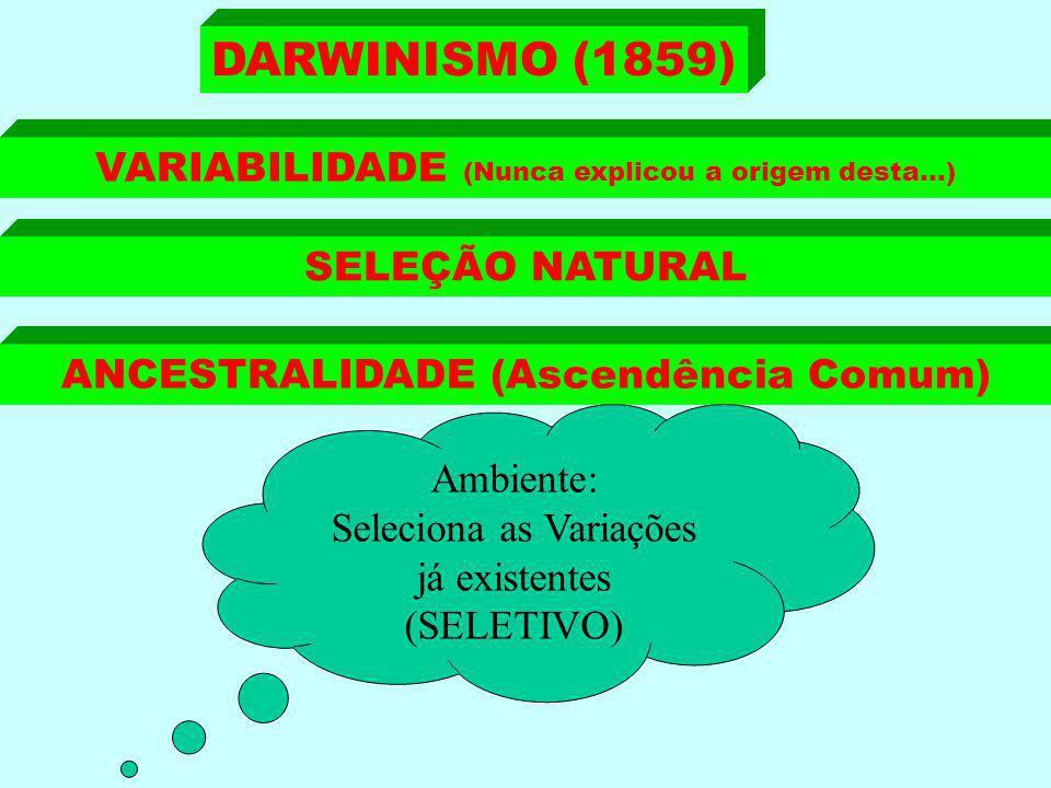 DARWINISMO (1859) VARIABILIDADE (Nunca explicou a origem desta...)