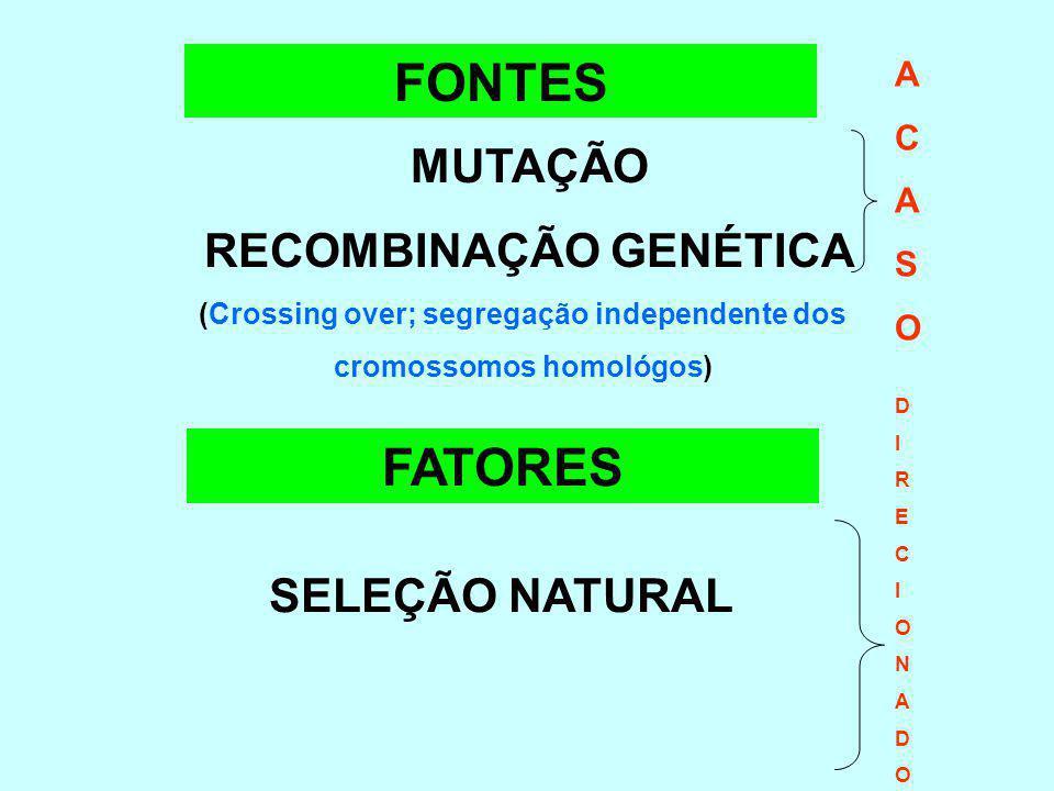 FONTES FATORES MUTAÇÃO RECOMBINAÇÃO GENÉTICA SELEÇÃO NATURAL A C S O