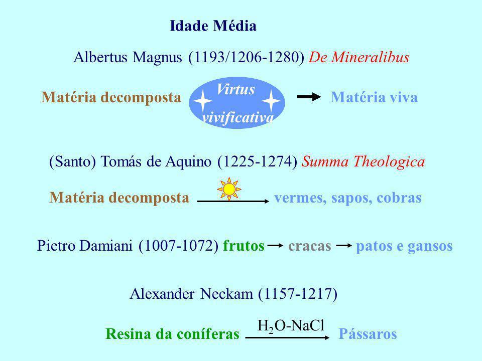 Idade Média Albertus Magnus (1193/1206-1280) De Mineralibus. Virtus. Matéria decomposta. Matéria viva.