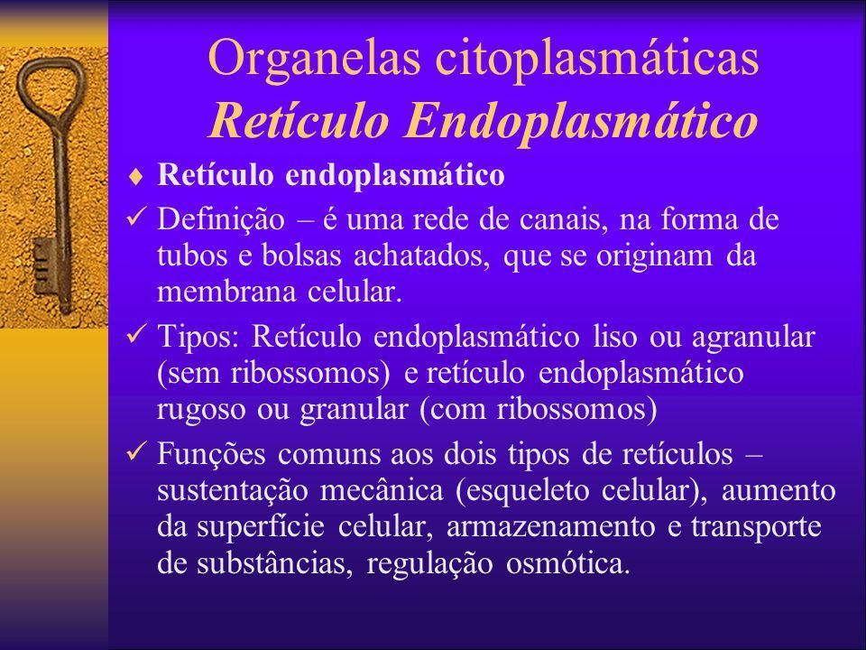 Organelas citoplasmáticas Retículo Endoplasmático