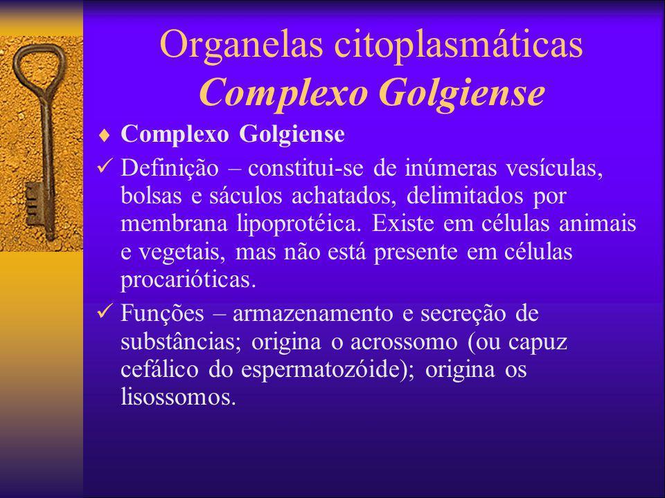 Organelas citoplasmáticas Complexo Golgiense