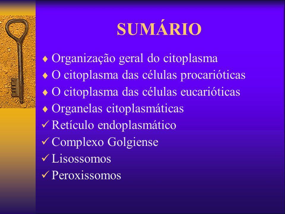 SUMÁRIO Organização geral do citoplasma