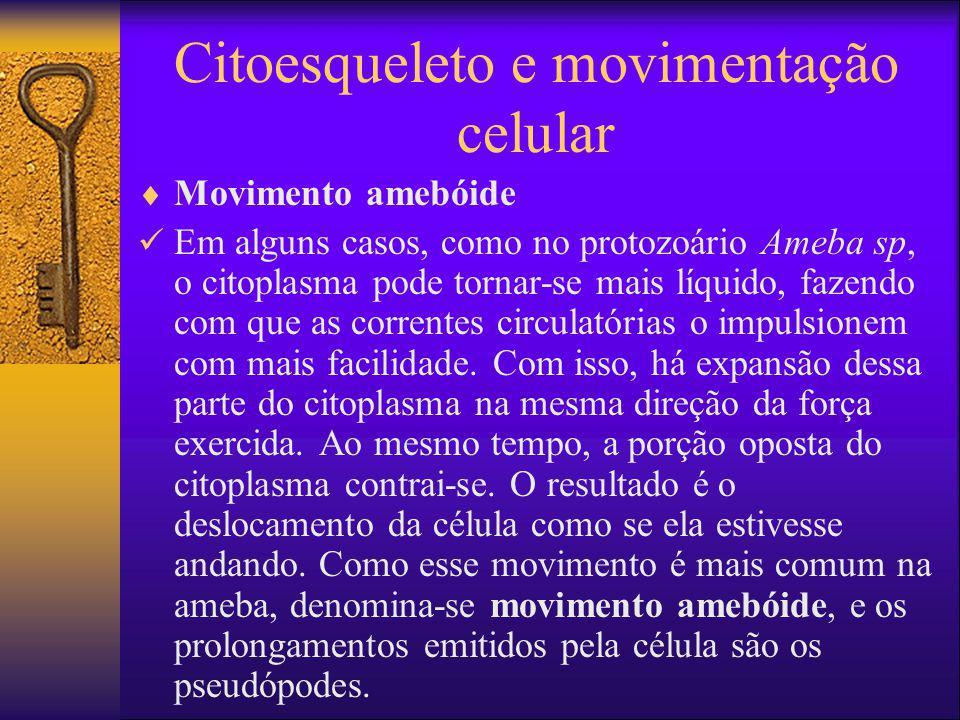 Citoesqueleto e movimentação celular