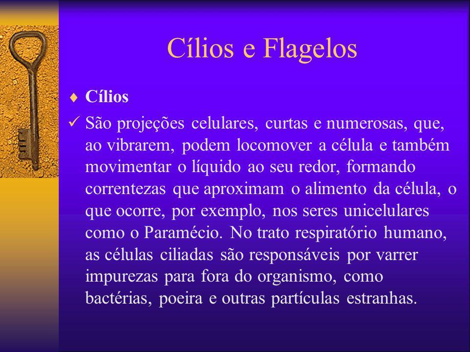 Cílios e Flagelos Cílios