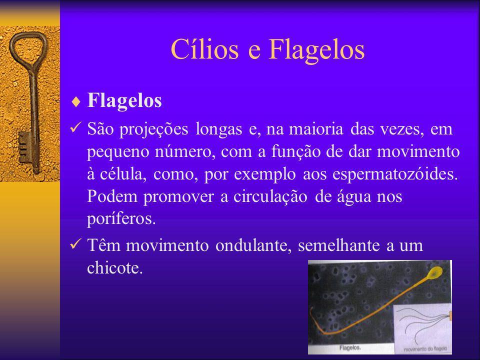 Cílios e Flagelos Flagelos
