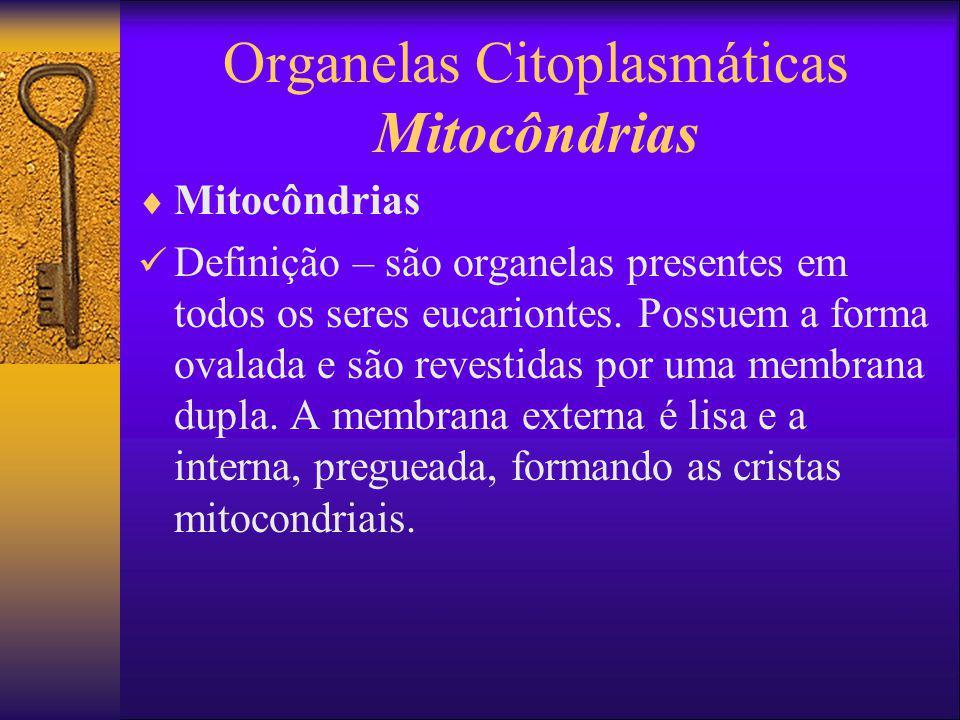 Organelas Citoplasmáticas Mitocôndrias