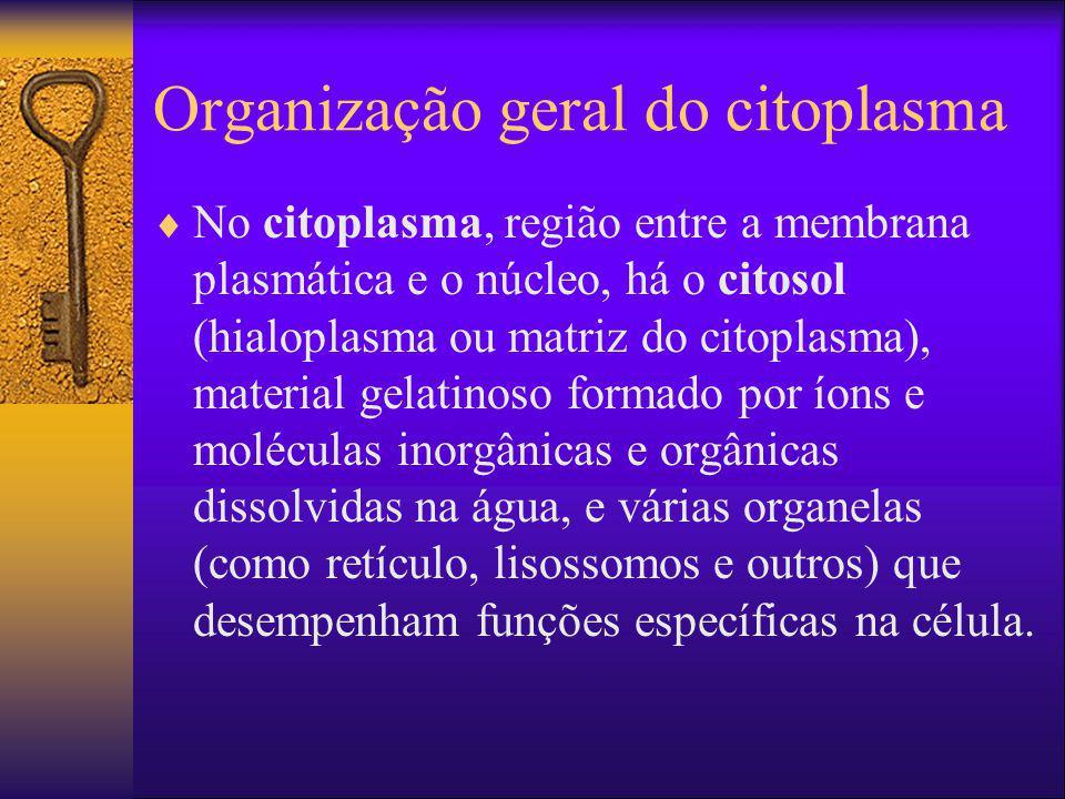 Organização geral do citoplasma