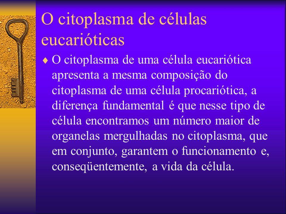 O citoplasma de células eucarióticas