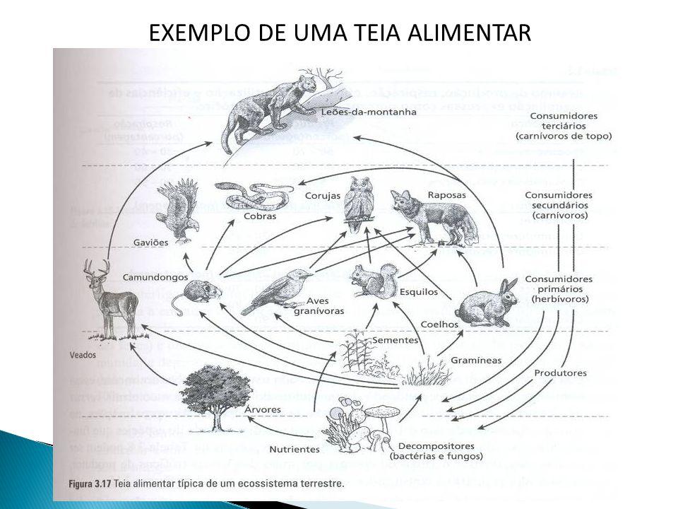 EXEMPLO DE UMA TEIA ALIMENTAR