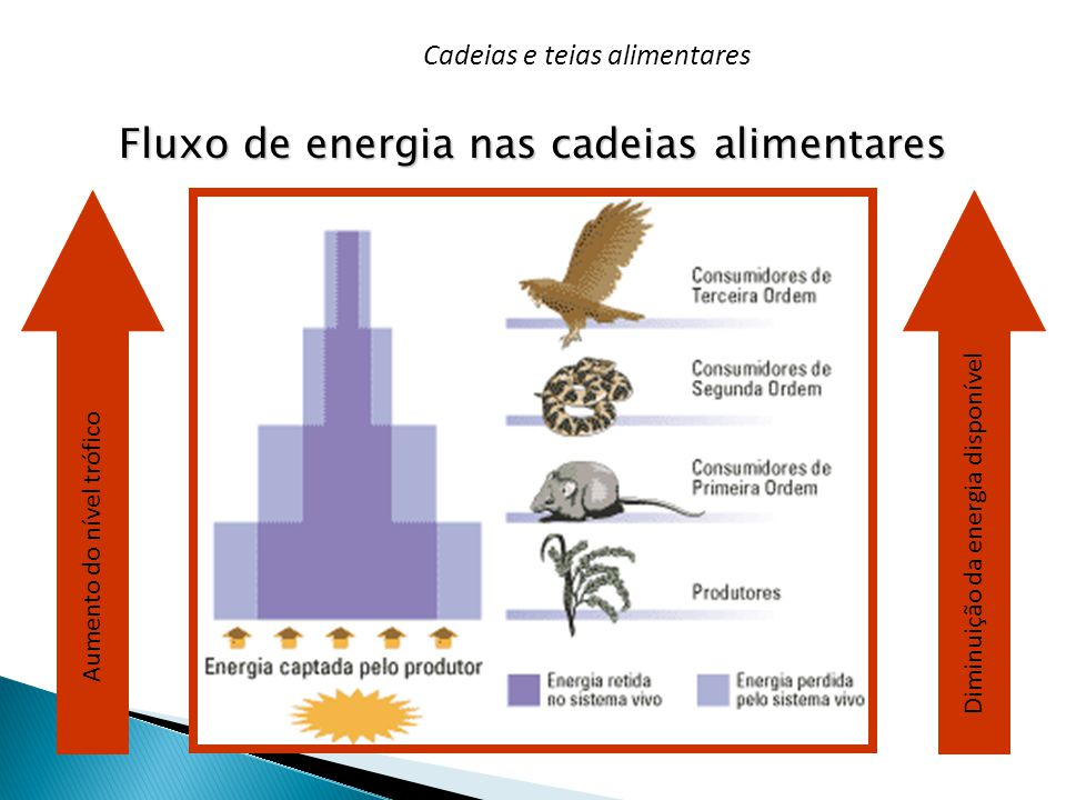 Fluxo de energia nas cadeias alimentares