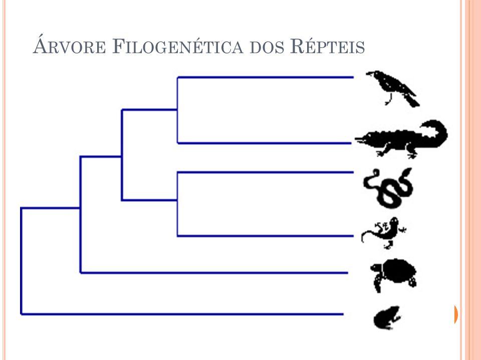 Árvore Filogenética dos Répteis