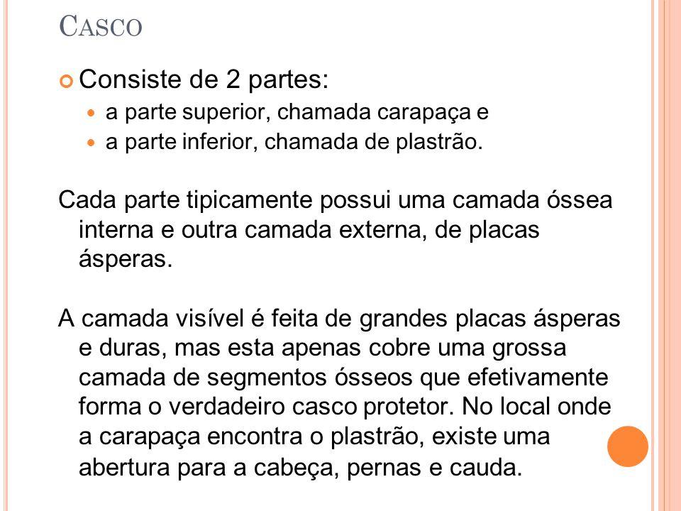 Casco Consiste de 2 partes: