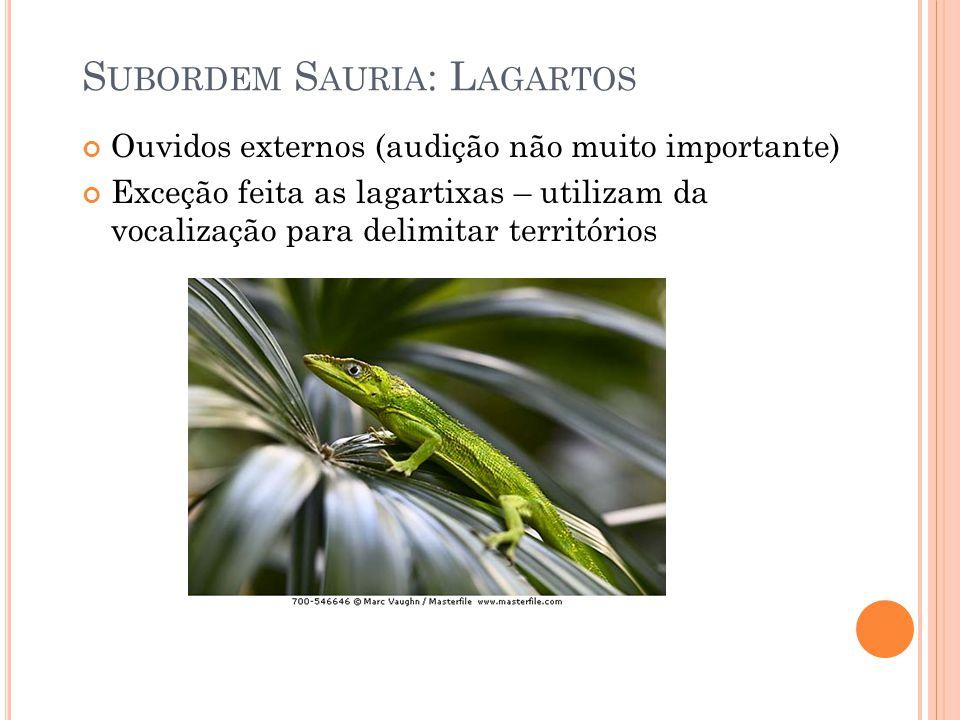 Subordem Sauria: Lagartos
