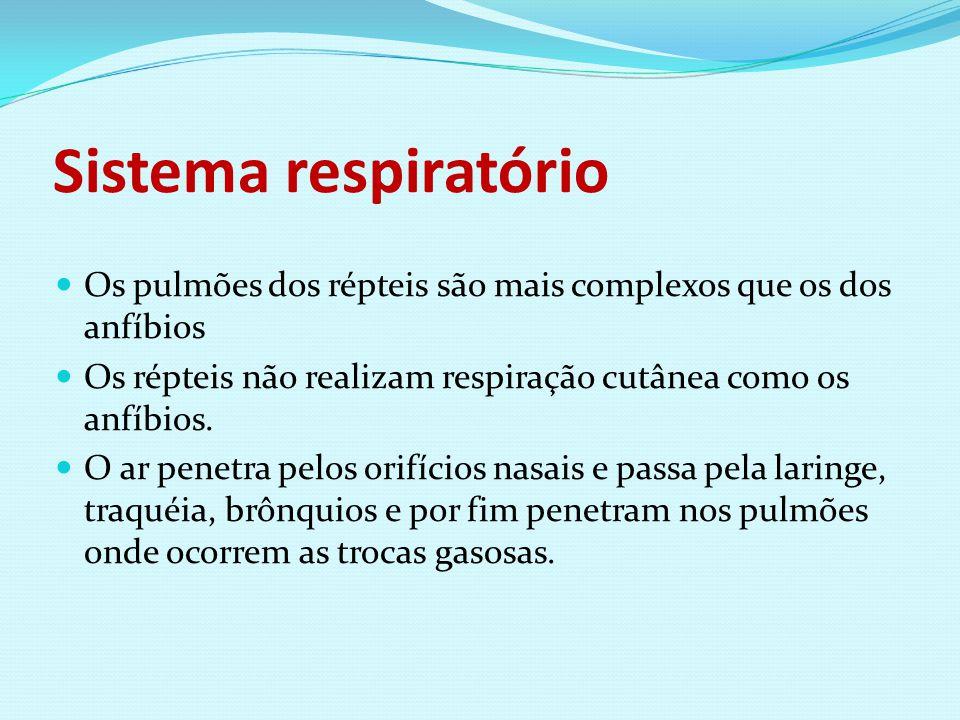 Sistema respiratório Os pulmões dos répteis são mais complexos que os dos anfíbios. Os répteis não realizam respiração cutânea como os anfíbios.