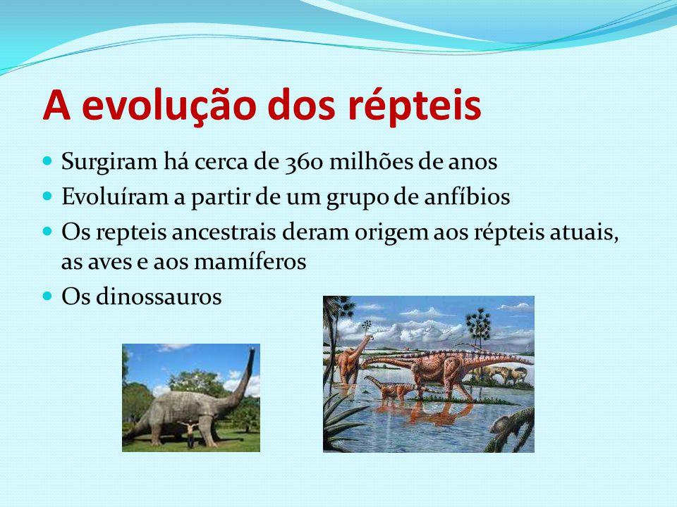 A evolução dos répteis Surgiram há cerca de 360 milhões de anos