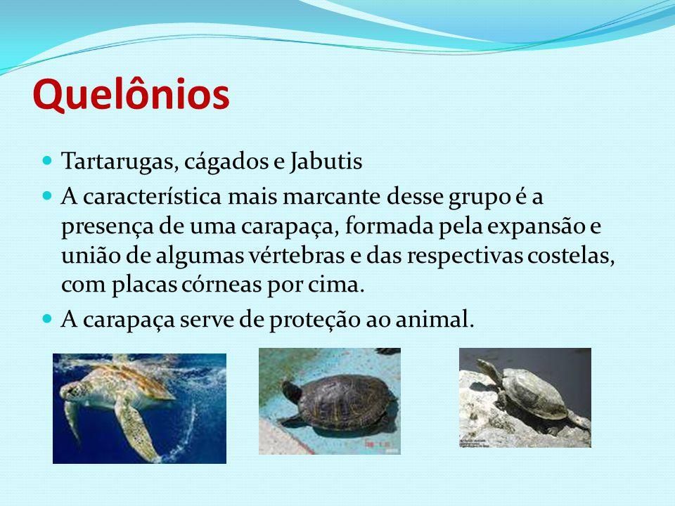 Quelônios Tartarugas, cágados e Jabutis