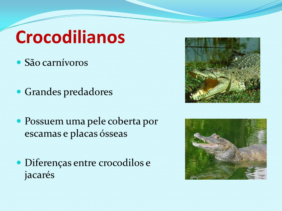 Crocodilianos São carnívoros Grandes predadores