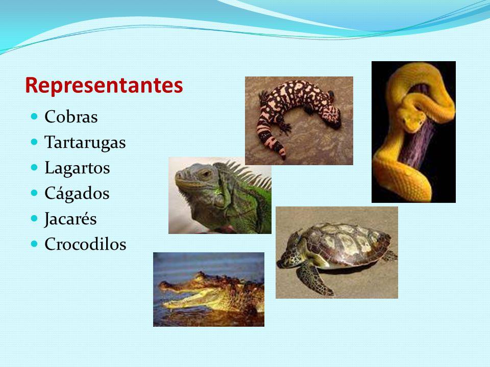 Representantes Cobras Tartarugas Lagartos Cágados Jacarés Crocodilos