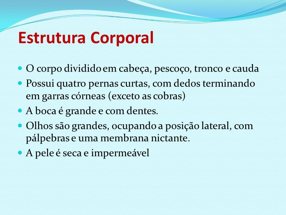 Estrutura Corporal O corpo dividido em cabeça, pescoço, tronco e cauda